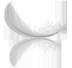 ezray-air-feather